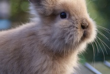 cute fuzzy animals / by not just baked