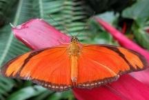FLUTTERBYS.. / Delicate, magical, fluttering colour..