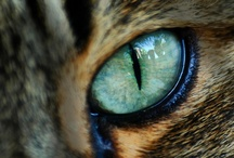 I HAVE MY EYE ON YOU