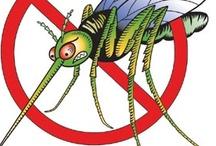 Pest  bugs  flies mosquitos