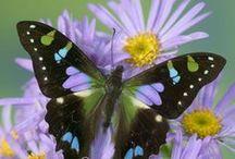 beatiful butterflys / by Debbie Lindsey