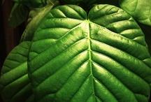 green thing / by sakahara yasuhiro