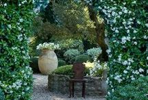 Garden Ideas / Future garden plans / by Christina Abbasi