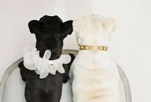 Weddings, Pets and Other Cute Critters / Have your dog at your wedding? Definitely!