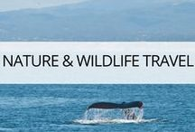 Wildlife and Nature Travel / Wanderlust and travel inspiration for wildlife lovers. Hiking, camping, backpacking, kayaking, mountains, forests, trees, lakes, rivers. If you travel to see nature's beauty and animals in the wild browse this board.Read more at https://thetravelbunny.com/