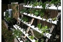 My Kitchen Garden ~ Hydroponics / Follow along as we learn how to grow organic vegetables using Hydroponics.  It's a learning process, but we are having a lot of fun! / by The Not So Perfect Housewife Blog