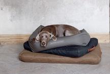 Pets / pets   huisdier   gezelschapsdier   hond   poes   vogel   je beste vriend