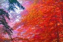 FALL IS FALLING / Such a stunning time of year.  My fave. Lots of lovely examples of fall colour captured here by various artists.