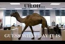HUMP -  Daaay / OK, I know that it is silly and may get old to some of you but, I still like, hump daaay!!! / by Rachel Smith