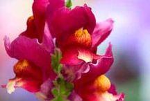 {flowers & plants} / by Erika Langefels