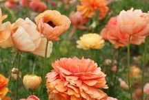 Gardening & Landscaping / by Jennifer Puglise