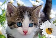 Too Cute:  Kittens, Cats