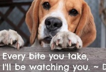 BEAGLES,, BEAGLES AND ANIMALS! / by Holly Monroe