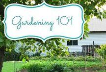 Gardening - Veggie's