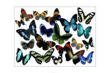 Butterfly Unit Study-Oct / by Beccy Crane Fink