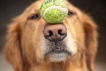 Tennis /  Start where you are. Use what you have. Do what you can.       Arthur Ashe / by Gail Meadows