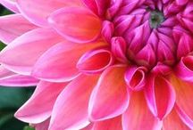 Blossoms & Bouquets ❥