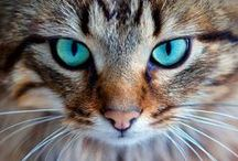 Cat-A-Tonic ❥