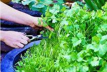 plant life. / gardening tips + tricks