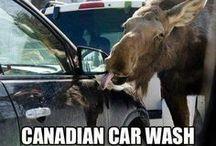 Canadian Humor / by Jill Francis