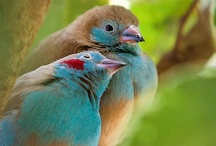 BIRDS of a feather... / by Leslee Walser