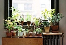 Green Thumb, I Have None // Gardening / by Sophie Mollison