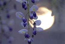 Simple. Serene. / by Pandora Miller