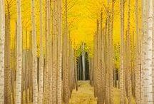 Trees***