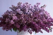 Decor-Flowers