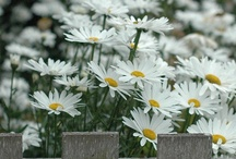 Gardens, Birds, & Plants ...oh my  / by Sheila Bell