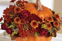 Holiday - Fall & Halloween / by Lynn Dingle