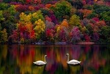 Autumn- The Best Time of the Year / by Lynn Dingle