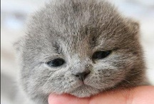 ahhhhhhhh it's so fluffy / by Emily Blinkhorn