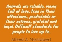 Critters / All other animalia, other than equine that is. / by Jennifer Stafford