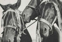 Horses / Reflections upon the role the horse has played in our society; from the working horses who pulled the farm carts and fire engines and those that carried explorers, soldiers and the police, to the horses ridden in local and national sporting events.
