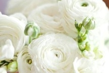Flowers  / by Kat Devers-West