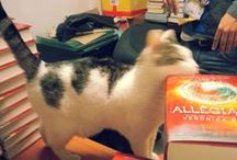 Epic Pets / Cute animals + awesome books = BEST PINTEREST BOARD OF ALL TIME.  / by Epic Reads