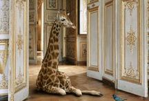 Giraffe / by Kat Devers-West