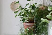 Outside In: house plants
