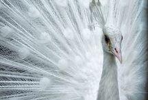 ~~Crisp White~~ / by Mo Elizabeth