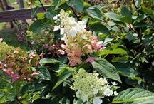 Secret Garden / Gardening ideas.  Plants and Flowers.  Hands in the Dirt. The Country Workshop