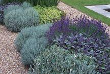 gardens / by Kimberly Jordan
