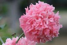 Garden Flower Love