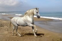 """""""A Horse is Horse Of Course Of Course"""" / by Jennie Chamberlain"""