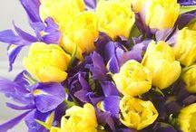 Debs Loves Flowers