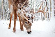 Let it snow <3!
