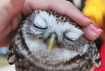 i luv owls. / by Kimberly Powers