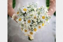 Festa de casamento | Wedding party