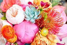 Flora & Fauna / by Liz Simons-Adams