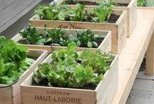 Hortas | Garden / Se você pensa que uma horta pede um grande jardim, está enganado: aqui você encontra ideias para criar um espaço verde dentro da sua casa. Mais em http://revistacasaecomida.com.br